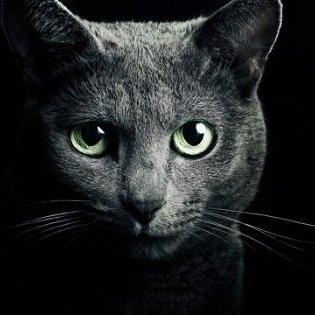 ネコは宇宙人が送り込んだ人類を監視するためのスパイだった! 専門家「ゴロゴロすら科学的に解明できぬ」