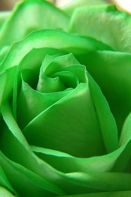 緑色で癒されよう
