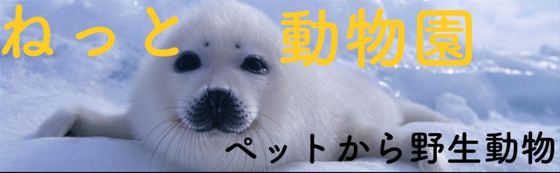 見た目は犬、頭脳はオオカミ!凶暴野犬「ディンゴ」とは何者?   ネット動物園 〜生き物全般からペットまで〜