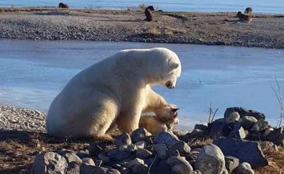 世界中が感動した「ホッキョクグマが犬の頭を撫でている」あの動画の背後にある驚くべき事実 : カラパイア