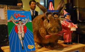ミナミのホテルでウサギが支配人に /大阪府 - トピックス | 犬や猫との幸せな暮らしのために ペット情報サイトsippo(シッポ)