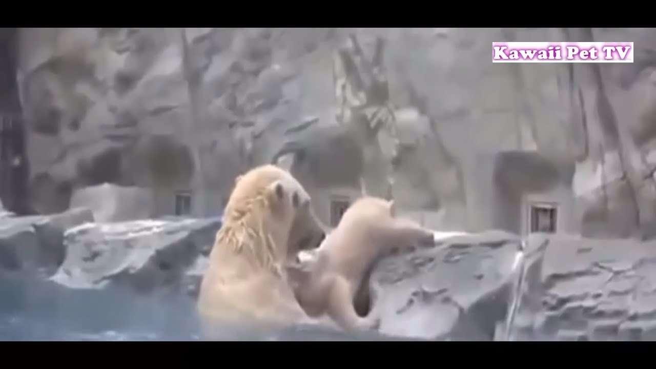 「泣ける感動動物」動物が他の動物の命を救う動画集●勇敢な犬,猫,熊...... - YouTube