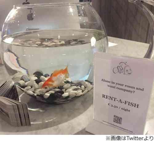 """寂しい宿泊客に""""金魚""""貸し出しサービスが好評"""