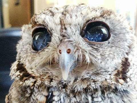 天然の星空を持つ盲目のフクロウ!宇宙の瞳が世界中から愛されている - NAVER まとめ