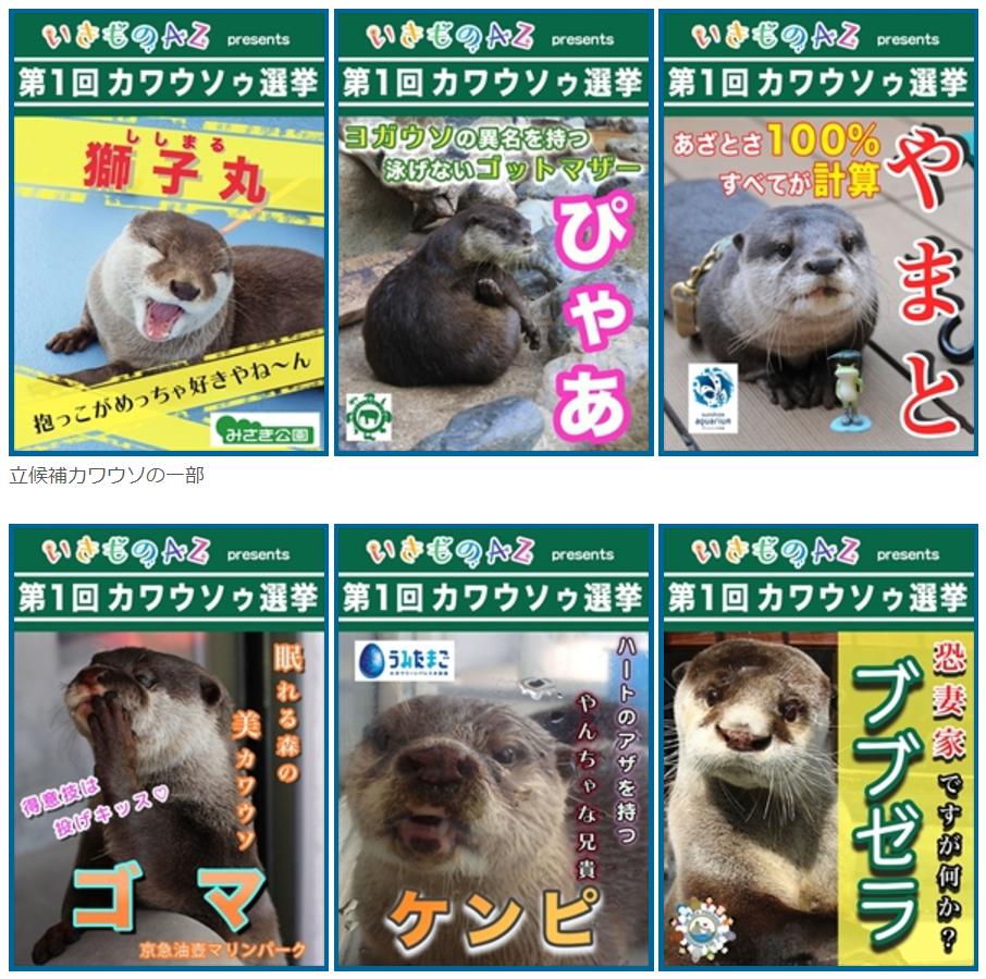 頂点に立つのはどの子?日本全国84頭のカワウソからナンバー1を決める「総選挙」を開催