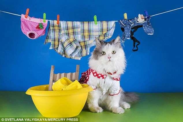 自分の衣類、親に洗濯してもらったのはいつまで?