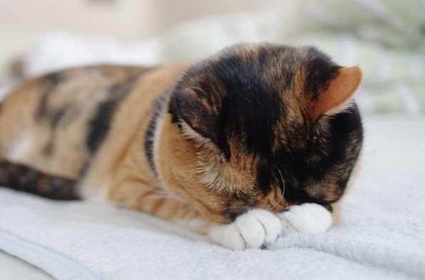 【猫】ごめん寝に癒やされよう!