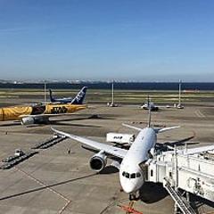 羽田空港で乗客から預かったプードル、滑走路に逃げ出す 14便に遅れ