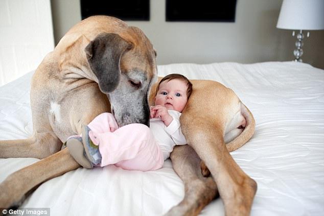 ペットを飼っている家に赤ちゃんを連れていく