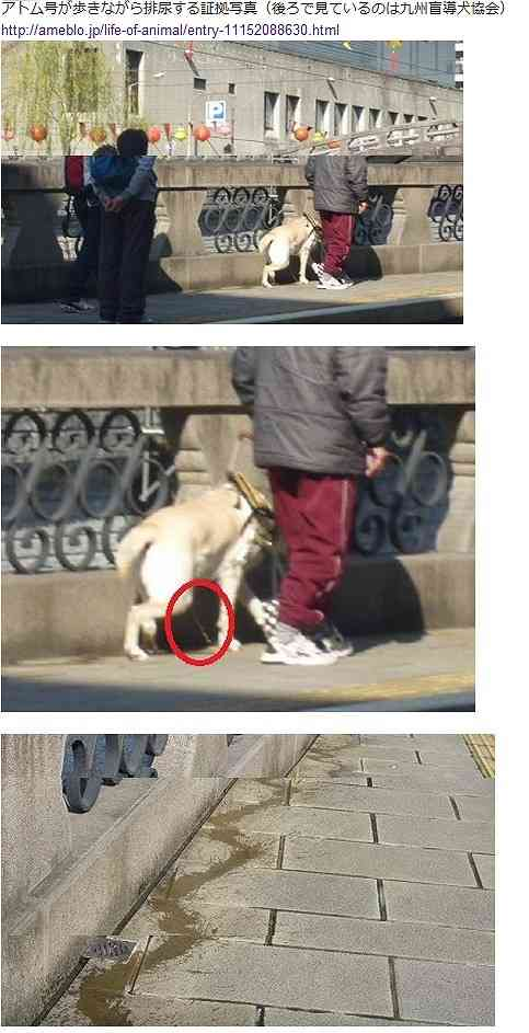 「盲導犬を蹴る動画」がSNSで拡散、盲導犬関連団体が声明「該当者と面談し厳重に対処する」