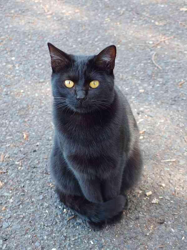 猫の尻尾マフラーが好きな人