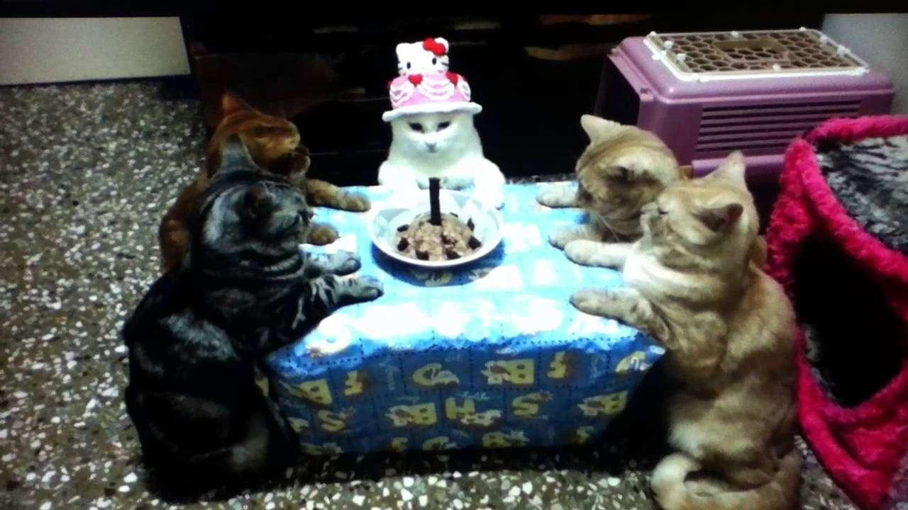 猫たちの誕生日パーティー - YouTube