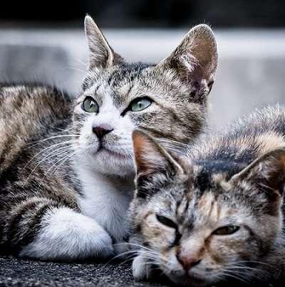 名古屋市がふるさと納税で犬の殺処分ゼロを達成 猫の殺処分ゼロも目指す取り組みが話題に