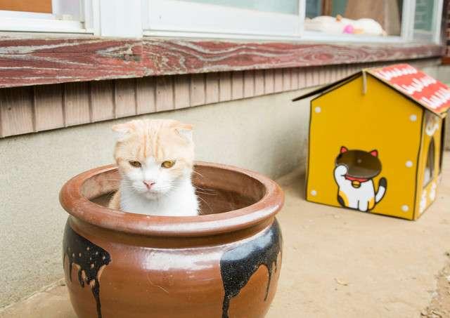 映画「ねこあつめ」を観ながら猫と触れ合える…「猫だらけ上映会」開催