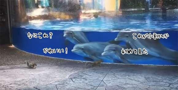 イルカの子どもたち、初めて見たリスに興味津々。一方リスは? : カラパイア