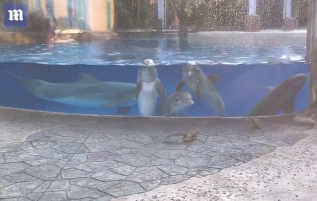イルカの子どもたち、初めて見たリスに興味津々。一方リスは?