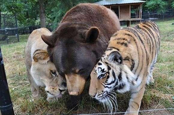 【画像】じゃれあってる動物達