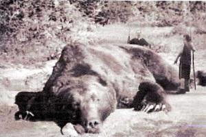 死んだはずのクマが反撃…ハンターがケガ