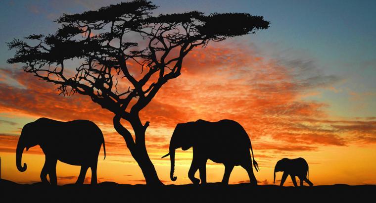 アフリカの話しよう