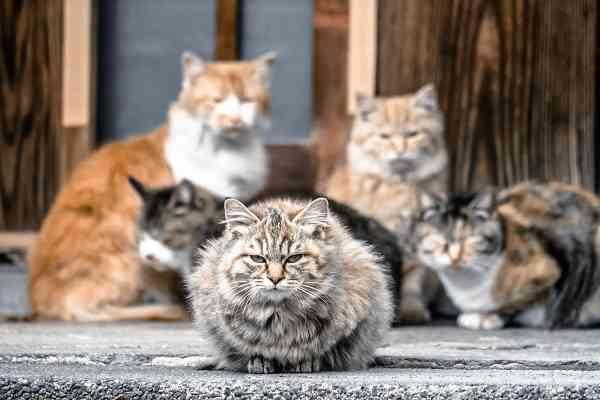 野良猫のふん対策