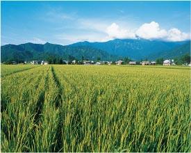 お米が美味しい地域