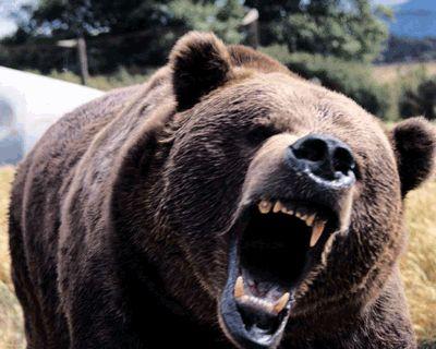 【衝撃】ロシアで熊に食べられる女性が実況した内容「助けてママ!熊が私を食べようとしてるの!」 - NAVER まとめ