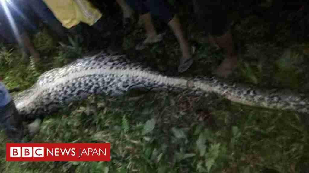 行方不明の男性、ニシキヘビの中に遺体 インドネシア  - BBCニュース