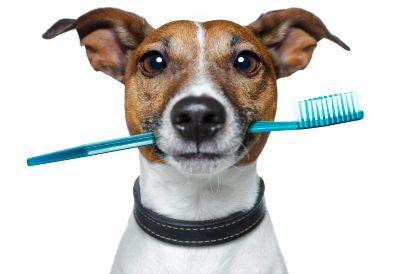 歯磨きの時間は何分ですか?