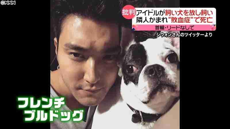 韓国アイドルの犬にかまれ死亡 敗血症とは(日本テレビ系(NNN)) - Yahoo!ニュース