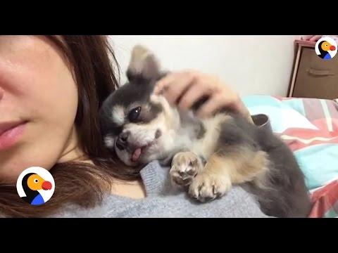 Dog Won't Sleep Until He Cuddles with Mom | The Dodo - YouTube