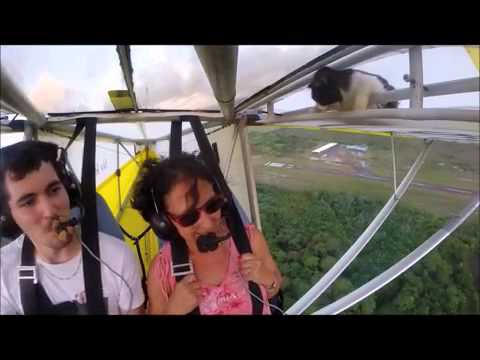 空飛ぶ猫 Remove cat before flight - YouTube