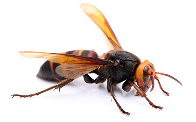 車いす女性、50分間スズメバチに刺され死亡 付き添い職員、蜂が多すぎ救助できず 愛媛・大洲市