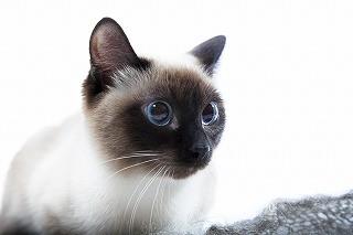猫の散歩は必要? - 獣医師が解説 | マイナビニュース