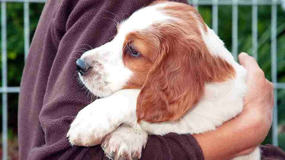 犬の里親の条件ってこれでいいの?「厳しすぎる」「現実的ではない」との声も