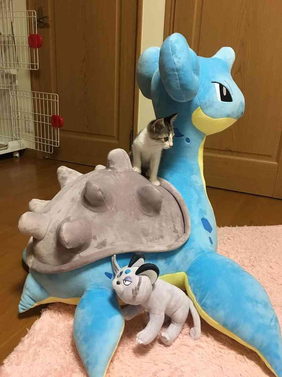 ポケモンの巨大ぬいぐるみを買ったら…1番喜んだのは飼い猫だった!