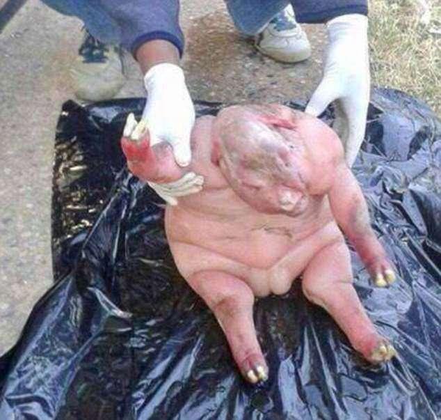 Sheep gives birth to human-like creature -  Bulawayo24 News