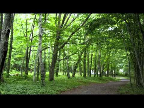 自然の音景色L 静かな森 (野鳥の鳴き声) ・ Nature Sound - YouTube