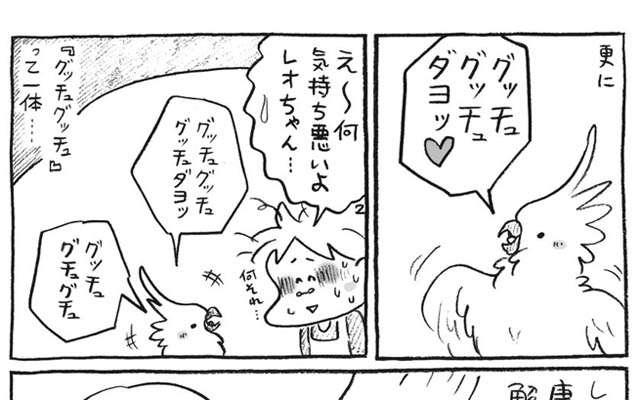 オウム「グッチュグッチュダヨ」 謎の言葉の『真相』に、飼い主ビックリ!  –  grape [グレイプ]