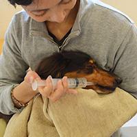 シニア犬の食事介助の基本と、具体的なやり方について【シニア犬(老犬)の食事】- 愛犬の老後にできること by GREEN DOG