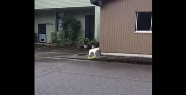 想像以上の発声(笑)!思いっきり「4!」と鳴く犬が発見される   BUZZmag