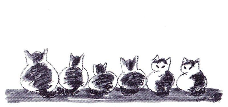 猫25匹飼いきれず、動物病院に捨てる 男性書類送検