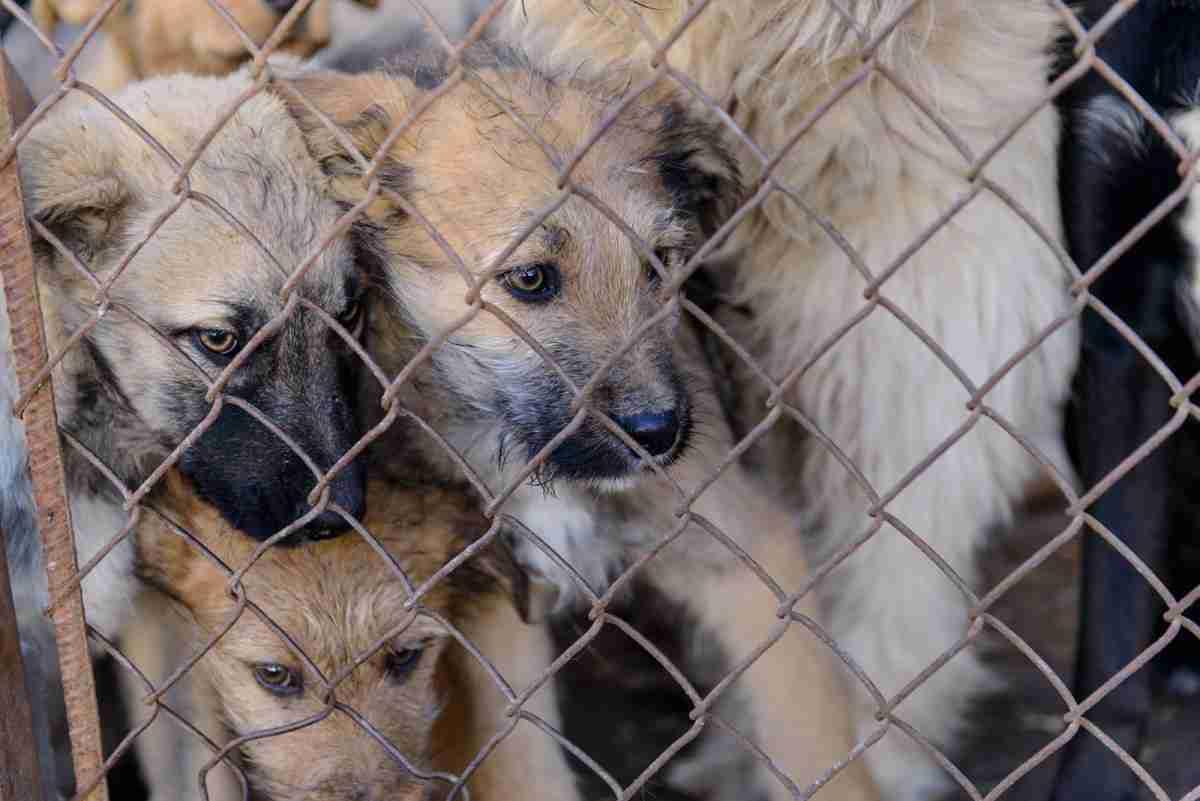アニマルホーダー(animal hoarder)とは?社会問題となっている飼育者たち