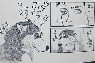 「や、やめてくれ~!一体何をする気!?」 初めて行く病院で注射を怖がるハスキー犬が可愛い(笑)