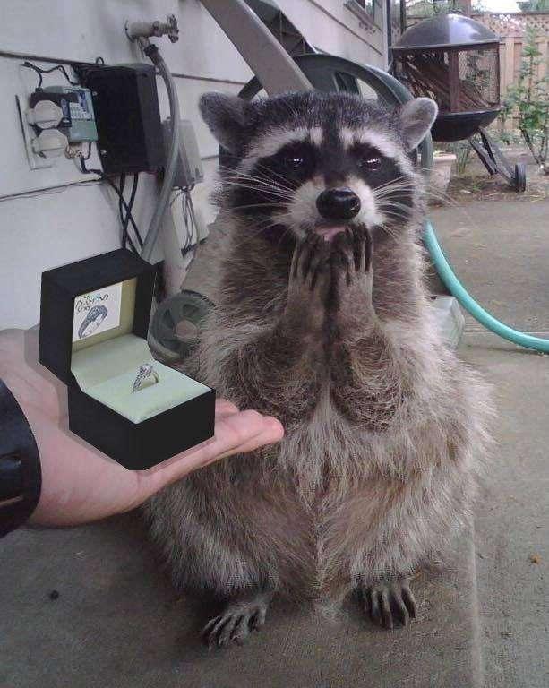 自分からプロポーズした方!