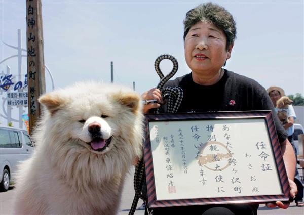 ぶさかわ秋田犬「わさお」の飼い主、菊谷節子さん死去 捨て犬を人気者に育てる