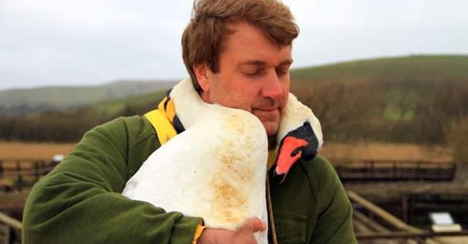 ケガを負い保護された白鳥。旅立ちの日に、世話をしてくれた男性へ贈ったのは「ありがとう」のハグだった|@Heaaart - アットハート