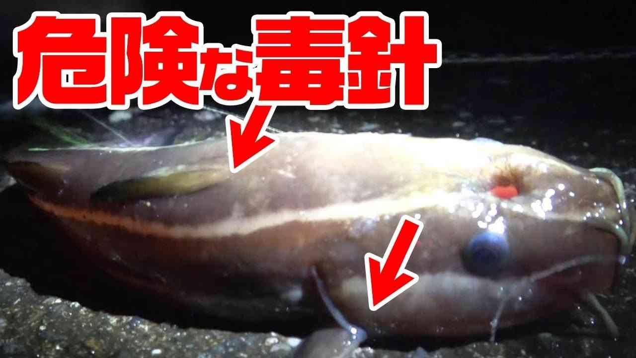 【危険】釣れた毒魚を食ってみた… - YouTube
