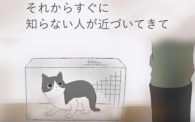 埼玉県、猫虐待事件を描いた映像 静かな物語から伝わる悲惨さ  –  grape [グレイプ]