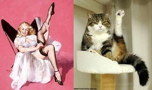 プロ過ぎ!モデルのポーズ完コピするネコが話題に!