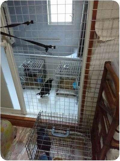NPO法人・犬猫みなしご救援隊・代表ブログ・みなしご庵へようこそ : 広島本部・11月1日